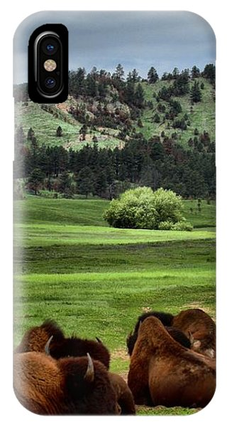 Wind Cave Bison IPhone Case
