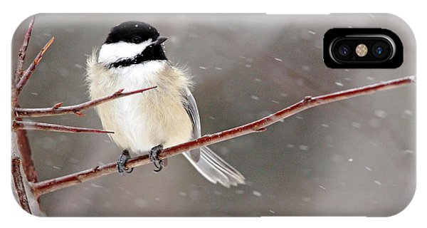 Windblown Chickadee IPhone Case
