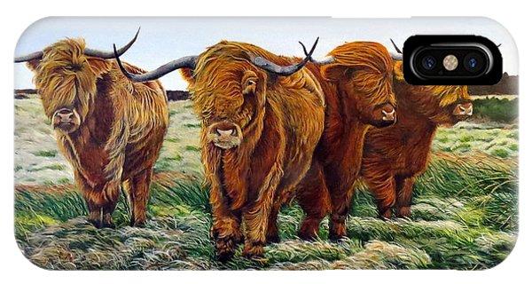 Windswept Highland Cattle  IPhone Case