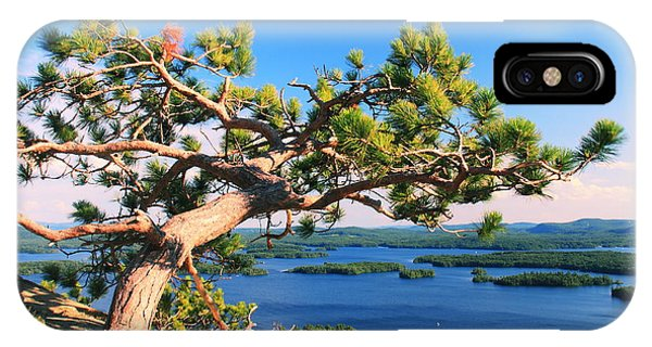 Windswept Pine On Rattlesnake Mountain IPhone Case
