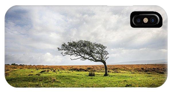 Windswept Tree IPhone Case