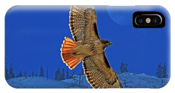 Hawk iPhone Case - Wings by Donna Kennedy