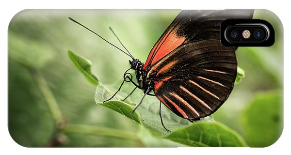 Wings Of The Tropics Butterfly IPhone Case