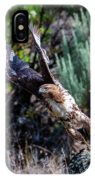 Red Tail Hawk iPhone Case - Wings Up by Mike Dawson