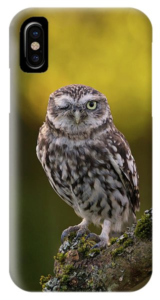 Winking Little Owl IPhone Case