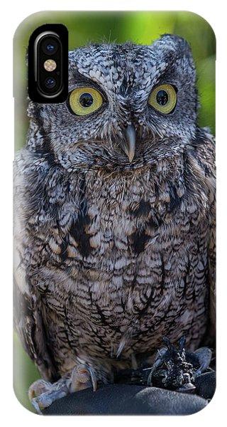 Winston Wildlife Art By Kaylyn Franks IPhone Case