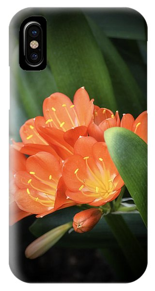 Winter Bloom Clivia IPhone Case