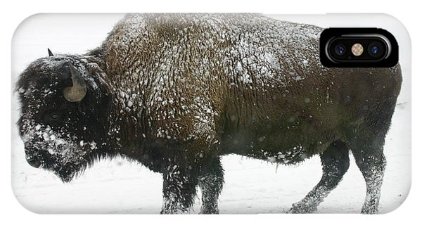 Winter Buffalo IPhone Case