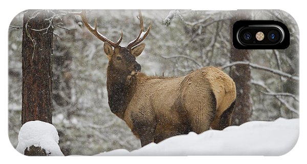 Winter Bull IPhone Case