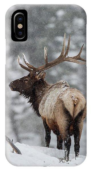 Winter Bull Elk IPhone Case