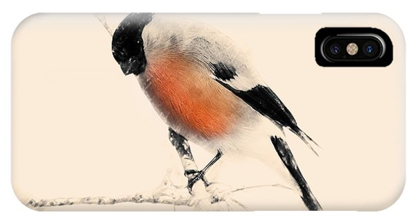 Winter Bullfinch IPhone Case