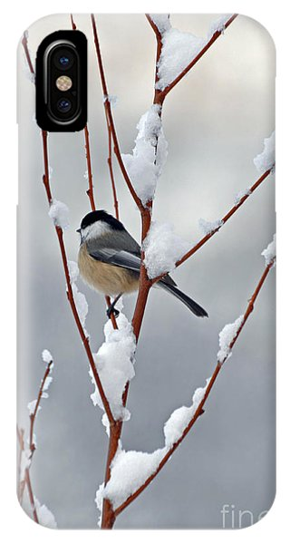 Winter Chickadee IPhone Case