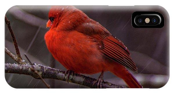 Winter Crimson  IPhone Case