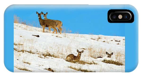 Mule Deer iPhone Case - Winter Deer by Mike Dawson