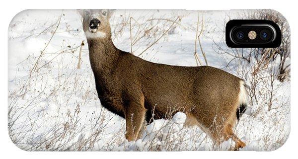 Mule Deer iPhone Case - Winter Doe by Mike Dawson
