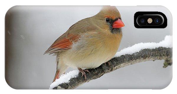 Winter Female Cardinal IPhone Case