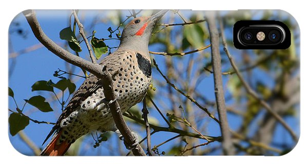 Northern Flicker iPhone Case - Winter Flicker by Fraida Gutovich