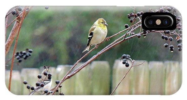 Winter Goldfinch In The Rain IPhone Case