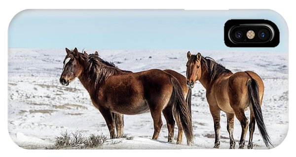 Winter In Sand Wash Basin - Wild Mustangs IPhone Case