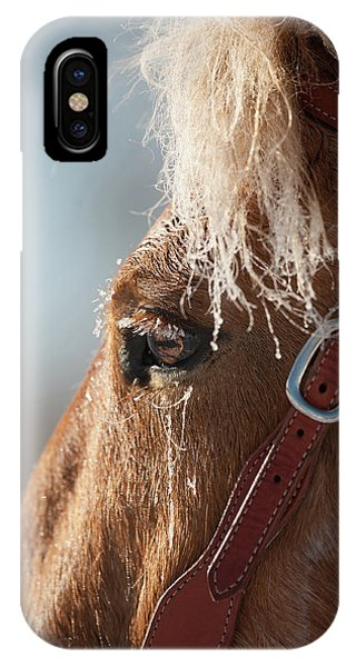iPhone Case - Winter Mustang Eye by Shawn Hamilton