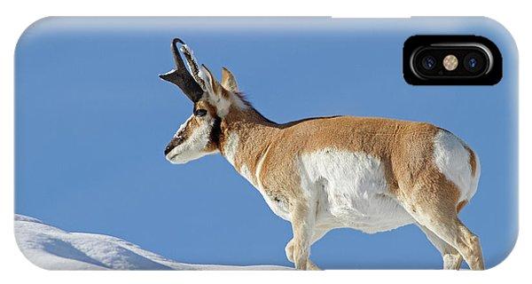 Winter Pronghorn Buck IPhone Case