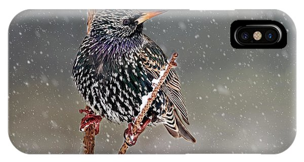 Winter Starling 2 IPhone Case