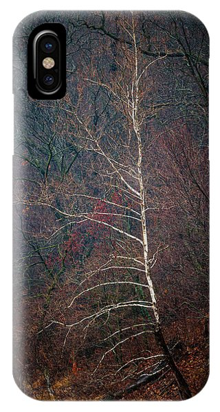 Winter Sycamore IPhone Case