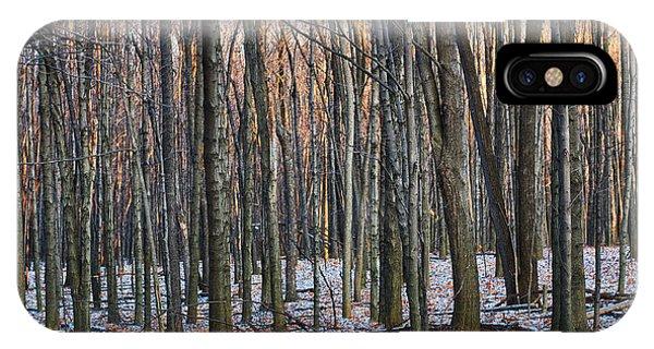 Winter - Uw Arboretum Madison Wisconsin IPhone Case