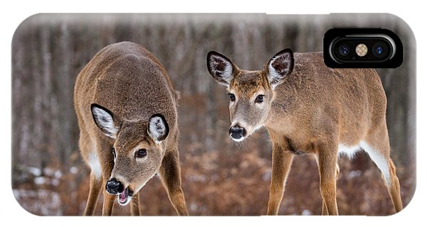 Winter White Tail Deer IPhone Case