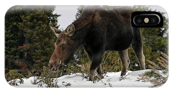 Wintering Moose IPhone Case