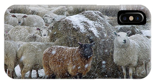 Wintering Sheep IPhone Case