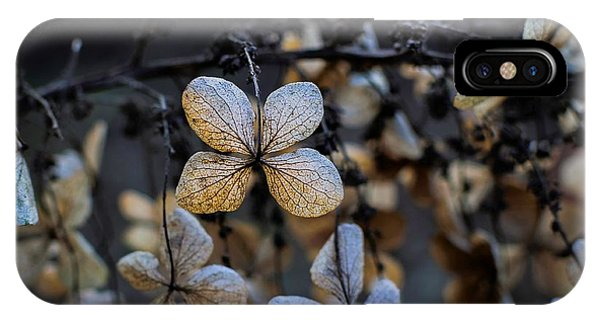 Winterized Hydrangea IPhone Case