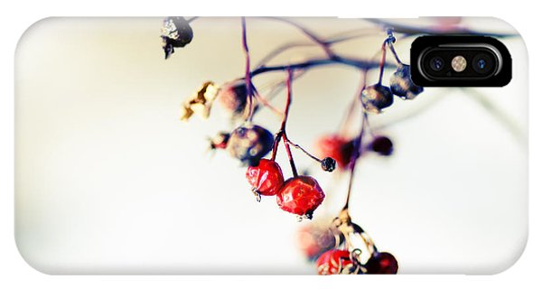 Cold Day iPhone Case - Winter's Berries by Todd Klassy