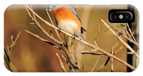 Winter's Bluebird  IPhone Case