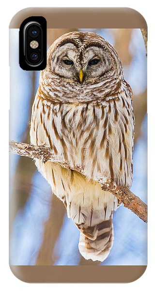 Wintry Stare IPhone Case