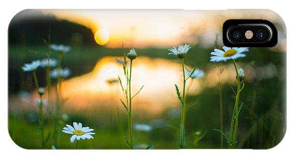 Wisconsin Daisies At Sunset IPhone Case