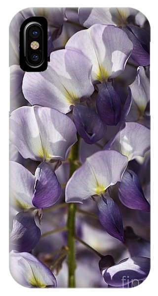 Wisteria In Spring IPhone Case