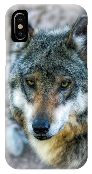 Wolf Gaze IPhone Case