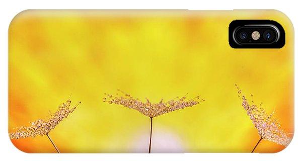 Golden Gardens iPhone Case - Wonderful Morning by Veikko Suikkanen