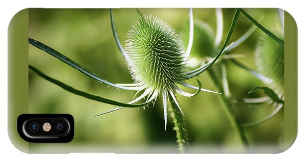 Wonderful Teasel - IPhone Case