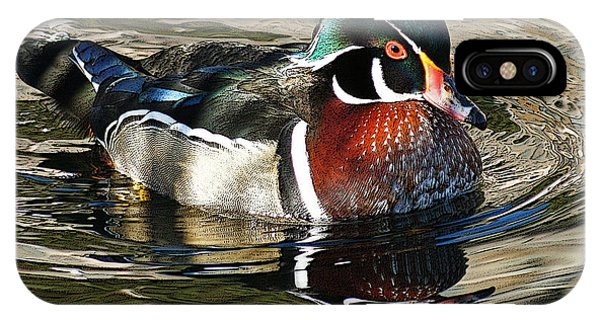 Wood Ducks iPhone Case - Wood Duck 1 by Ernie Echols