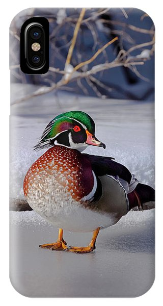 Wood Duck In Winter Snow And Ice, Montana, Usa IPhone Case