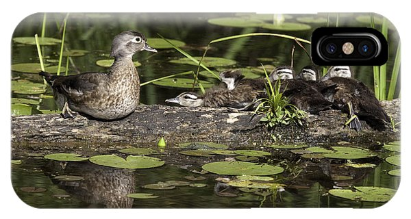 Wood Duck With Her Ducklings IPhone Case