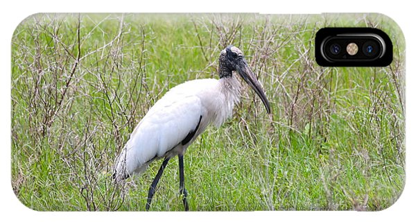Wood Stork In The Marsh IPhone Case