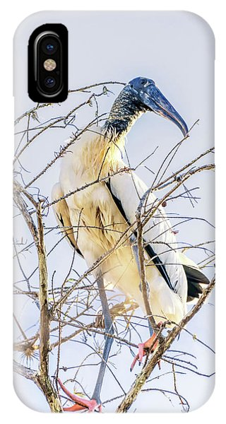 Wood Stork Sitting In A Tree IPhone Case