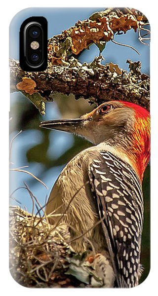 Woodpecker Closeup IPhone Case
