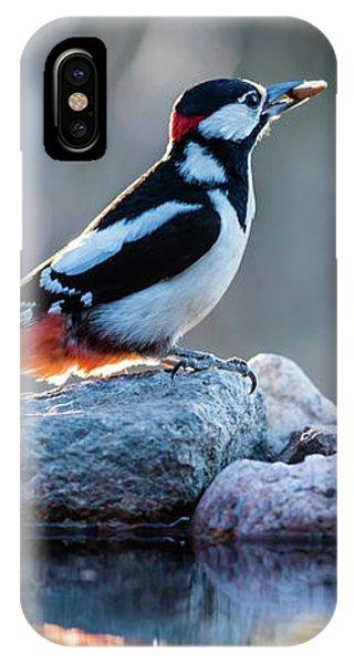 Woodpecker In Backlight IPhone Case