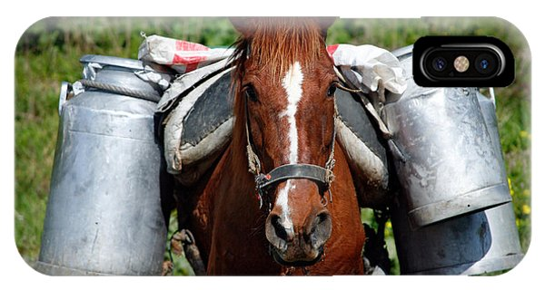Horse iPhone Case - Work Horse At The Azores by Gaspar Avila