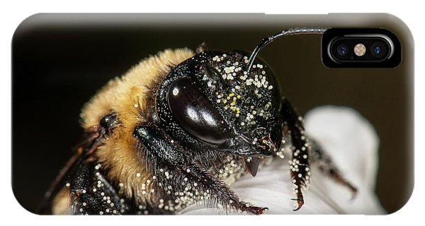Worker Bee And Pollen Detail IPhone Case