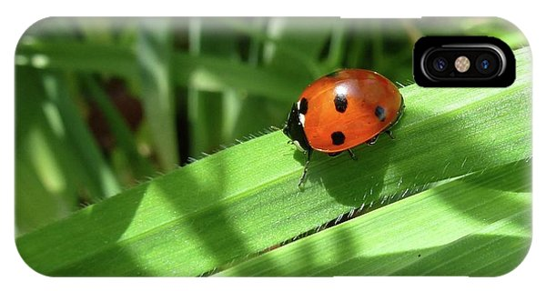 World Of Ladybug 1 IPhone Case